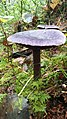 Mushroom on Swedish forest floor 20.jpg