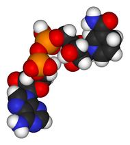 vad är ett enzym