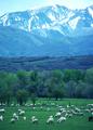 NRCSUT03043 - Utah (6455)(NRCS Photo Gallery).tif