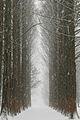 Nami island winter.jpg