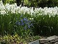 National Arboretum in June (22946538263).jpg