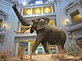 National Museum of Natural History, Washington, D.C. (2013) - 09.JPG