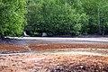 National nature reserve Soos in spring 2015 (12).JPG