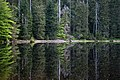 Nationalpark Schwarzwald Wildsee-18.jpg