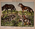 Natural history of the animal kingdom for the use of young people (5974369503).jpg