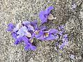 Natural lavender.jpg
