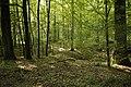 Naturdenkmal Dolinenketten Oberer Wald (4 Dolinen), Kennung 81150100016 05.jpg