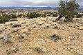 Near Arroyo de los Cerros Colorados - Flickr - aspidoscelis.jpg
