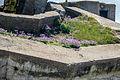 Normandy '12 - Day 4- Stp126 Blankenese, Neville sur Mer (7466600380).jpg