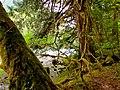 North Cascades National Park (9290007169).jpg
