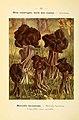 Nouvel atlas de poche des champignons comestibles et vénéneux (6459651843).jpg