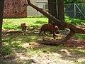 OKC Zoo May 2007 - 53 (497242485).jpg