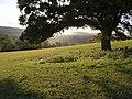 Oak above Kenn - geograph.org.uk - 581678.jpg