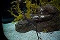 Oceanário de lisboa (8322275767).jpg
