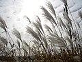 October sky, On danse au gré du vent d'octobre - panoramio.jpg