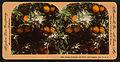 Orange Blossom and Fruit, Los Angeles, Cal., U.S.A, by Singley, B. L. (Benjamin Lloyd).jpg