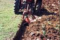 Oranje kod Naupara 4.2004.jpg