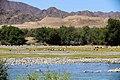 Oranjefloden-2465 - Flickr - Ragnhild & Neil Crawford.jpg