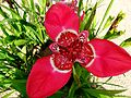 Orchid (8770743385).jpg
