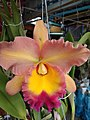 Orchid from Thailand 9.jpg