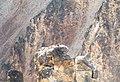 Osprey Nest on flat rock.jpg