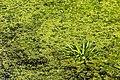 """Osterholz-Scharmbeck, Naturschutzgebiet """"Breites Wasser"""" -- 2018 -- 3036.jpg"""