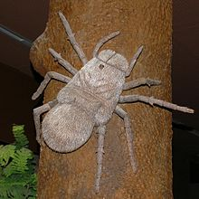 Outdated model of ''Megarachne'' as a large spider.