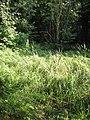 Overgrown overspill channel - geograph.org.uk - 972138.jpg