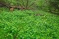 Přírodní rezervace Biely vrch, okres Ilava (06).jpg