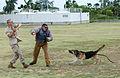 PMO K-9 unit conducts bite training 150415-M-TH981-004.jpg