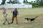 PMO K-9 unit conducts bite training 150415-M-TH981-004.jpg