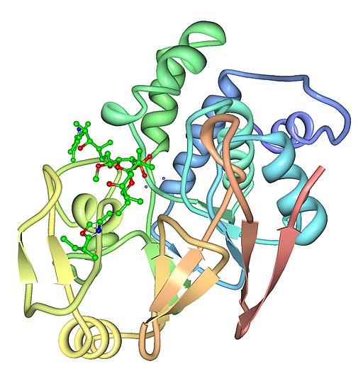 PPP1C Gamma Isoform