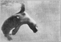 PSM V82 D523 Seal plunging under water.png