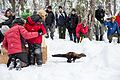 Pacific Fisher Release at Mount Rainier National Park (2016-12-17), 055.jpg