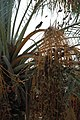Palm tree with bird friend (4117839516).jpg