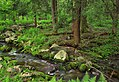 Palustrine Forest (1) (8846333545).jpg