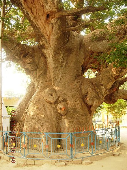 essay on peepal tree Top 22 benefits of trees a tree-lined street will also slow traffic – enough to allow the drivers to look at the store fronts instead of whizzing by.