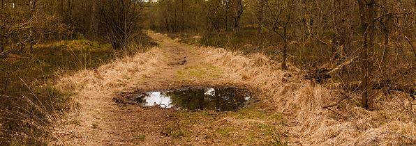 Park Drents-Friese Wold. Locatie Dieverzand. Modderpoel op zandpad 02.jpg