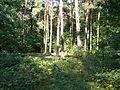 Park Piłsudskiego w Łodzi (6).JPG