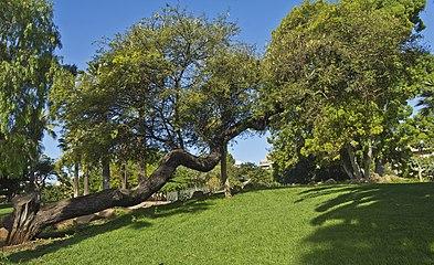 Parque La Granja 03.jpg
