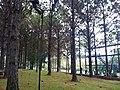 Parque da Cidade - Jundiaí - panoramio (53).jpg