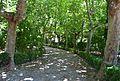 Passeig amb plataners a Viver, Alt Palància.JPG
