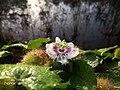 Passion Flower 3.jpg