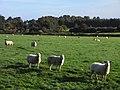 Pasture, Brightwell Baldwin (geograph 2122810).jpg