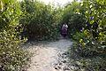 Pathway - Sundarban Biodiversity and Interpretation Area - Taki - North 24 Parganas 2015-01-13 4672.JPG