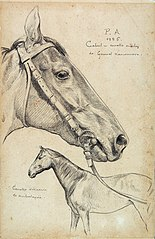 Cabul - Cavalo Inglês - Estudo