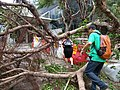 People climb over trees to go to work the morning after Typhoon Mangkhut near Immigration Tower in Wan Chai.jpg