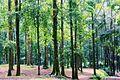 Pepohonan Tajuk, Taman Nasional Gunung Halimun Salak, Bogor.jpg