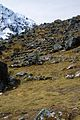 Peru - Salkantay Trek 086 - remains of the Incan road (7339853482).jpg
