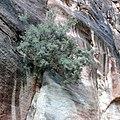 Petra - panoramio (10).jpg